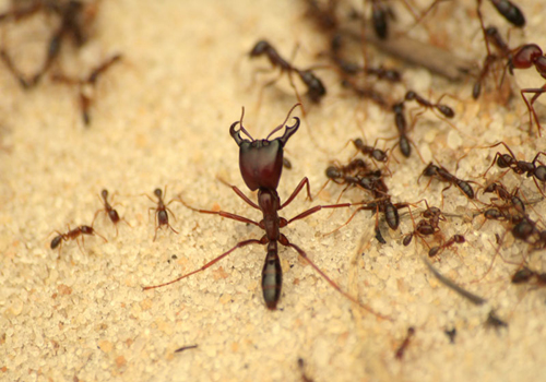 Ants can create serious problems